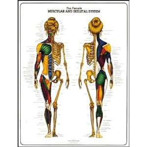 Female Muscular and Skeletal System Anatomy Chart: