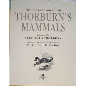 THORBURNS MAMMALS COLOR OLD ANIMAL PRINTS c1936 ART