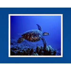 Green Sea Turtle   Matted Image: Home & Kitchen