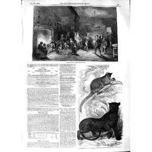 1848 ALLHALLOW EVEN TREE KANGAROO BLACK LEOPARD ZOO Home & Kitchen