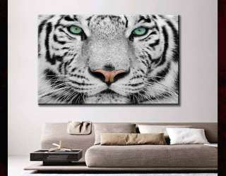 modern Canvas Art animal white tiger head face 24x36